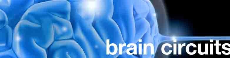 | Brain Circutes